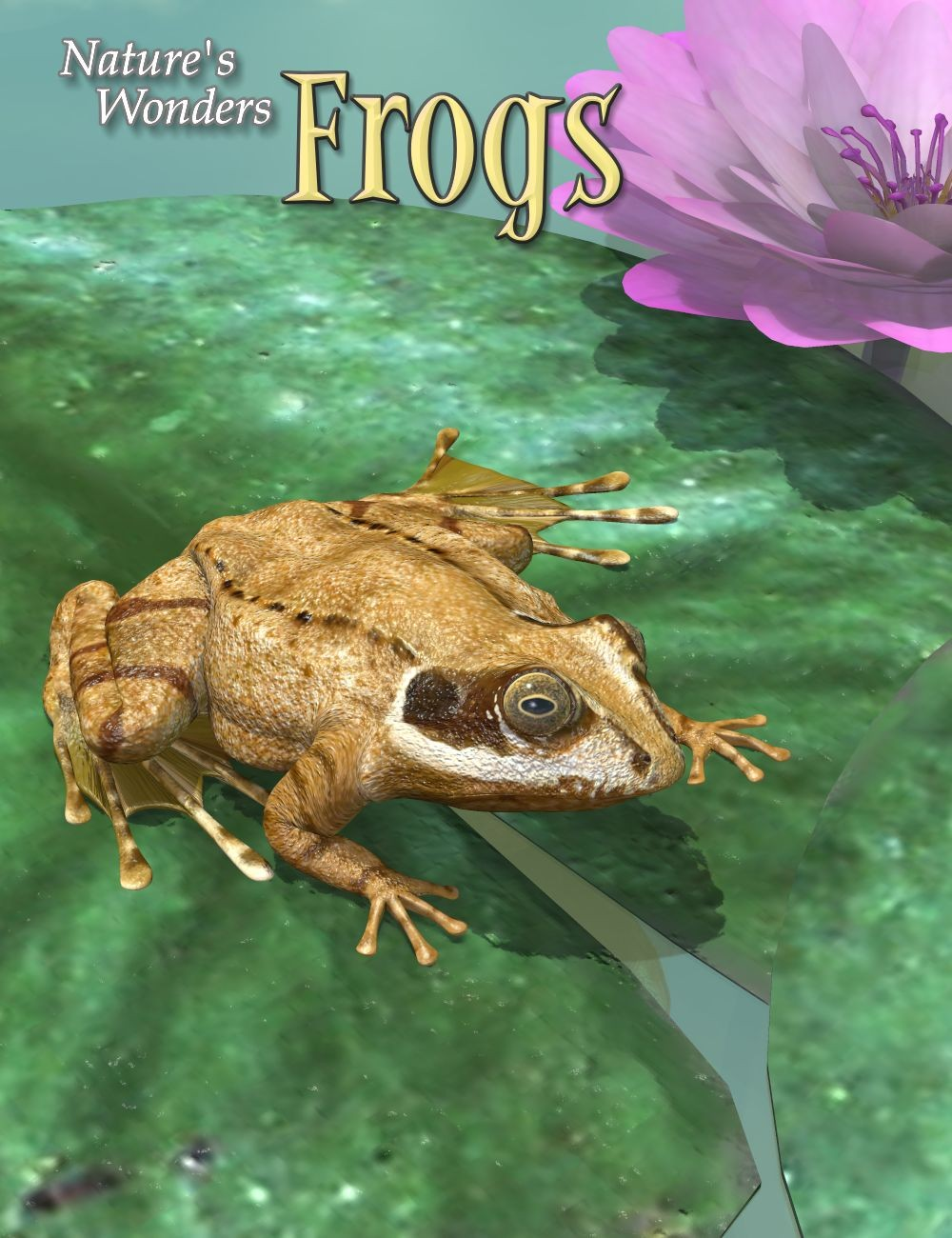 nature u0027s wonders frogs a ken gilliland creation at hivewire 3d