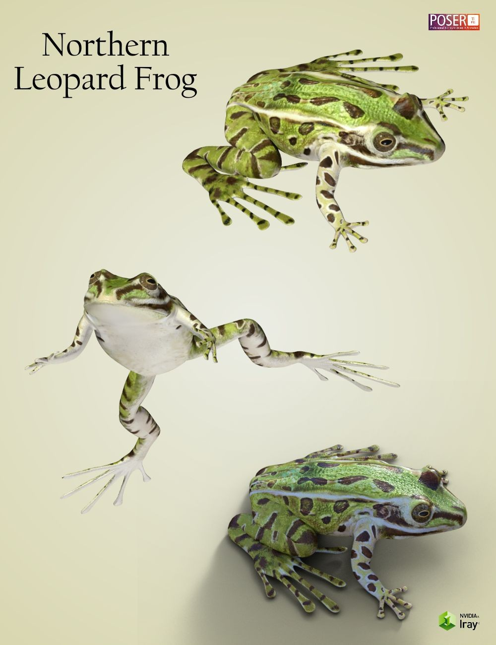 wonders of frogs Learn more about the northern tinker frog - with amazing northern tinker frog photos and facts on arkive help us share the wonders of the natural world donate.