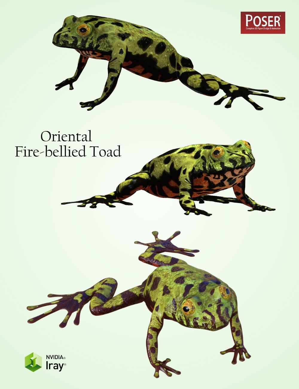 Are Frogs and Toads the Same?