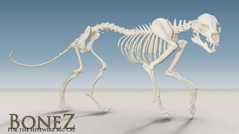 BoneZ for the HiveWire Big Cat