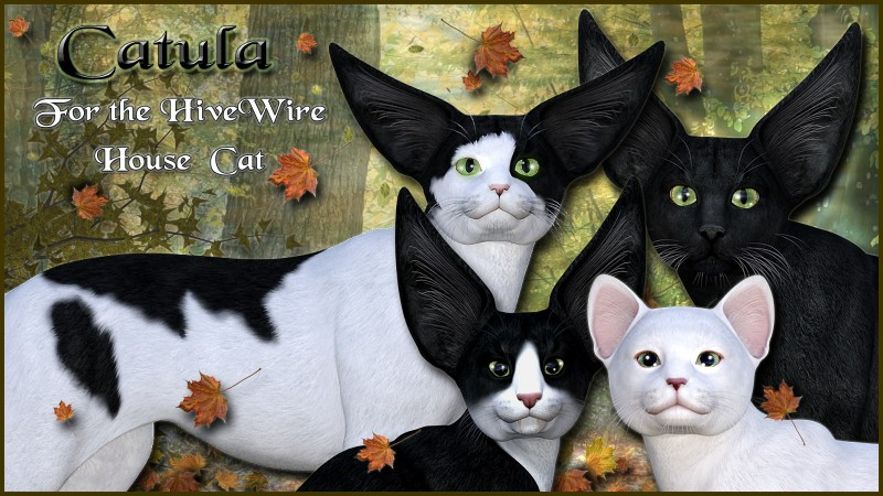 Catula for the HiveWire House Cat