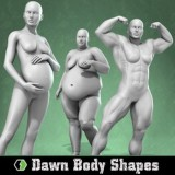 Dawn's Body Shapes