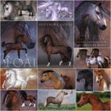 HiveWire Horse Breeds Value Stack