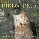 SBRM Birds of Prey Vol 4 Mini-Set - Crested Eagles