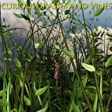 Curious Grass and Vines