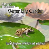 Nature's Wonders Water Lily Garden
