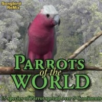 SBRM Parrots of the World