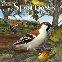 SBRM Sparrows of the World