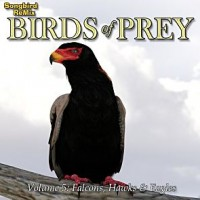 SBRM Birds of Prey Vol 5 - Falcons, Hawks & Eagles
