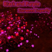 phd Black and Purple Superfly Addon for Starweed