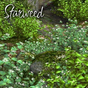 Starweed - A Lisa's Botanicals 3D Creation