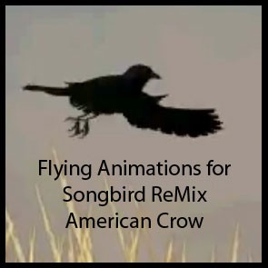 Fly for Songbird Remix American Crow