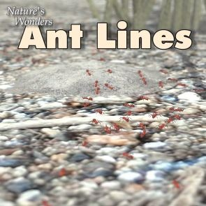 Nature's Wonders Ant Lines