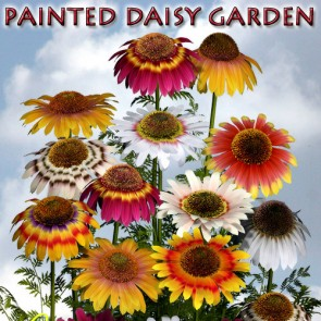 Painted Daisy Garden