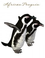 SBRM Penguins