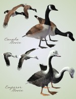 Songbird ReMix Waterfowl Vol 4 - Geese, Loons, Grebes & Coots