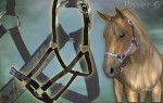 AMV Horse Equipment-Halter