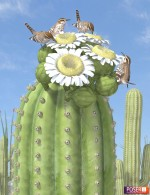 Nature's Wonders Saguaro Habitat