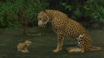 BNB Talking Cats for the HW Big Cat and Cub