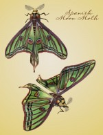 Moths of the World Value Stack