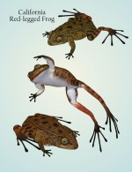 Nature's Wonders Frogs