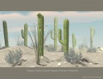 Nature's Wonders Habitat Value Stack Extender with Saguaro Habitat