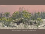 Nature's Wonders Habitat Value Stack Extender with Sagebrush Habitat