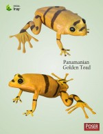 Nature's Wonders Frogs of the World Vol. 3