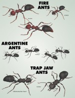 Nature's Wonders Ants Value Stack