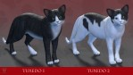 CWRW Black, White & Tuxedos for the HW House Cat