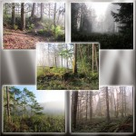 Forest Mist Backgrounds