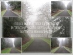 Foggy Walk Backgrounds