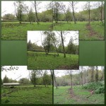 Cow Pasture Backgrounds