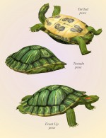 Nature's Wonders Turtles
