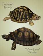 Nature's Wonders Turtles of the World Vol. 1