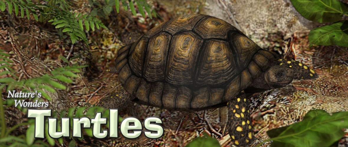 Nature's Wonders Turtles of the World Vol 1